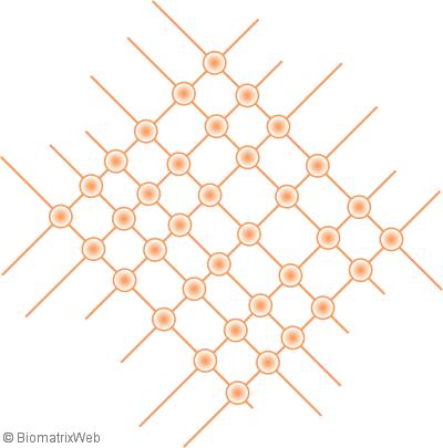 concept of the biomatrix