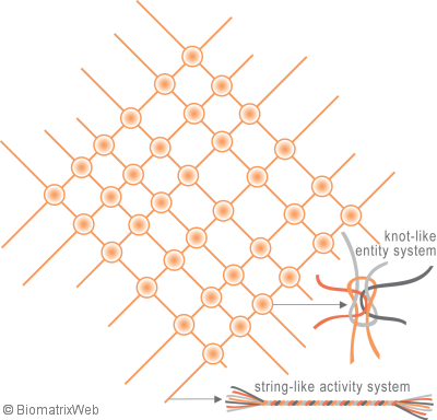 two types of systems within the biomatrix - biomatrix systems theory