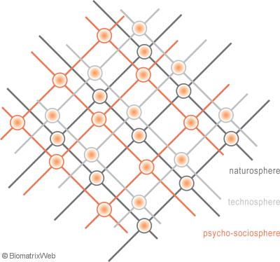 sub-webs of the biomatrix