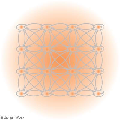 field perspective of the biomatrix