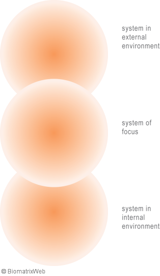 systems theory: entity systems boundaries from the field perspective
