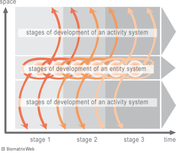 stages of development: entity and activity systems